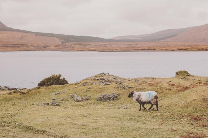 Ireland_connemar_2